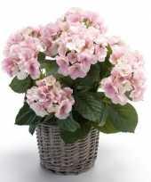 Kunstplant hortensia roze in rieten mand 45 cm